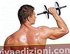 Definiția Muscle Mass