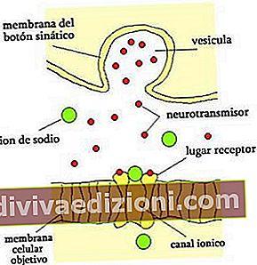 Definiția neurotransmițător
