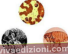 Definiția Microorganisms