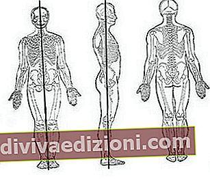 Definiția anatomical position