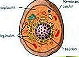 Definiția Cytoplasm