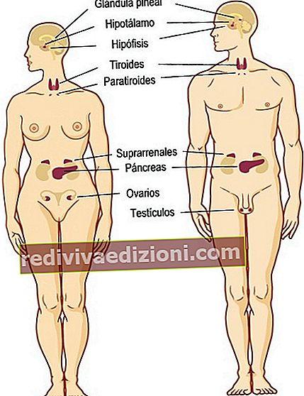 Definiția Glands