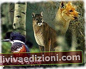 Definiția Zoology