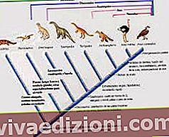 Definiția Phylogeny