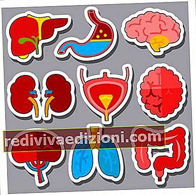 Definiția organelor vitale