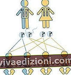 Definiția Genotype