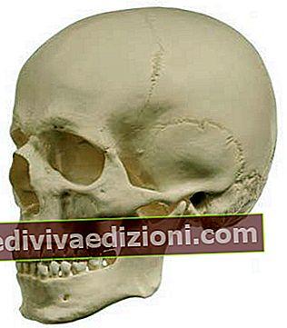 Definiția Skull