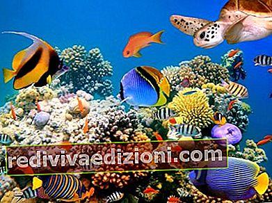 Definiția Marine Biology