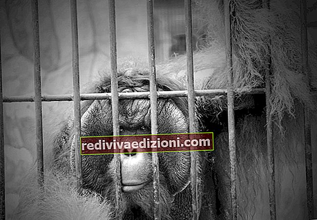 Definiția Captivity