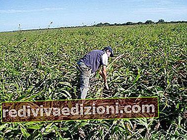 農業の定義