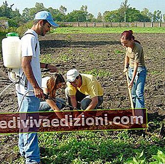 Definiția Agriculture