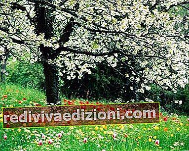 Definiția Spring