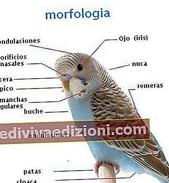 Definiția Morphology