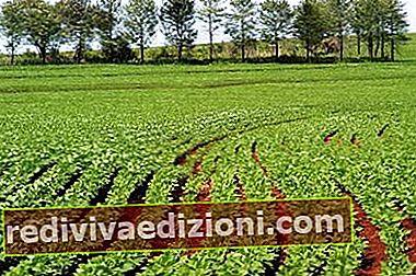 Definiția Agricultural
