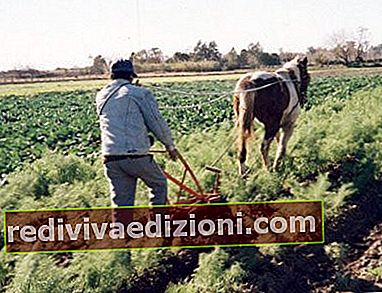 Definiția Rural