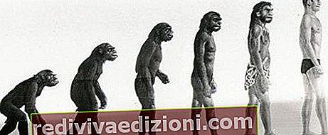 ความหมายของวิวัฒนาการ