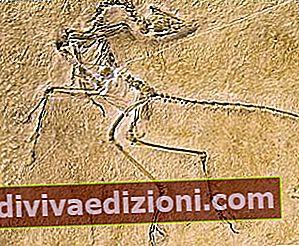Definiția Fossil