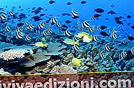 Definiția Aquatic Ecosystem