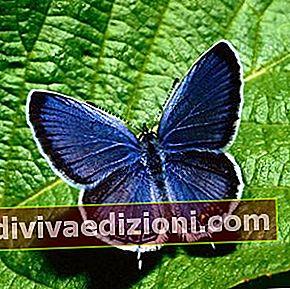 Definiția Butterfly