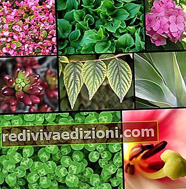 Definiția Plant Kingdom