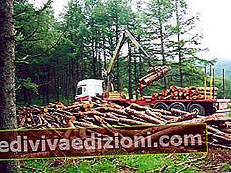 Definiția Forest Exploitation