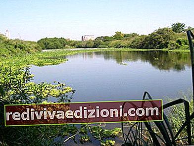 Definiția Ecological Reserve