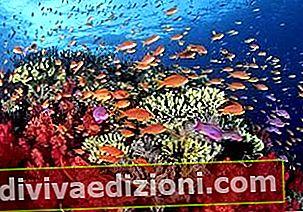 Definiția Reef