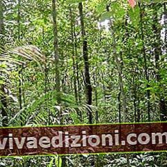 Definiția Jungle